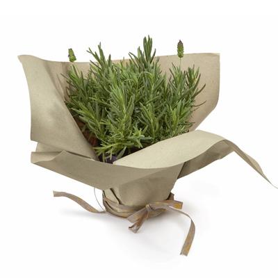 gräspapper-ark